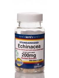 Echinacea (1)